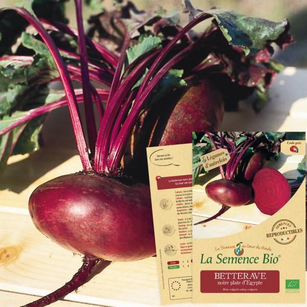 100 Graines de Betterave Noire d/'Egypte Méthode BIO seed légume potager jardin