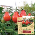 TOMATE Red Pearshaped  Bio