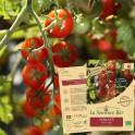 TOMATE cerise rouge Bio