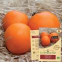 TOMATE Orange Queen Bio