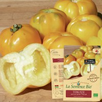 TOMATE poivron jaune Vincent Bio