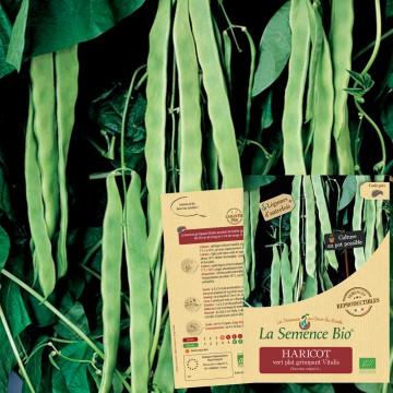 HARICOT vert plat grimpant Vitalis Bio