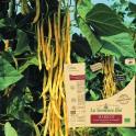 HARICOT beurre grimpant Neckargold  Bio