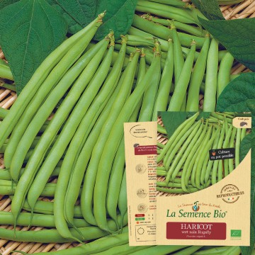 HARICOT vert nain Rugally Bio
