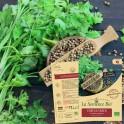 CORIANDRE à petites graines Bio