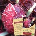 CHICOREE rouge de Vérone Bio