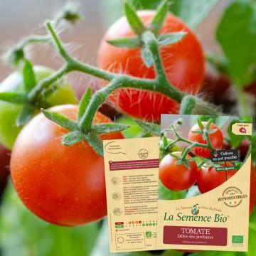 TOMATE Délice des jardiniers Bio