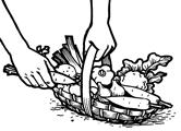 recolte semences bio La Semence Bio