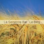 semis de seigle - engrais vert La Semence Bio