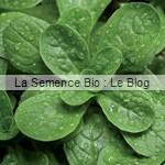 semences bio mâche - La Semence Bio