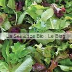 mesclun potager LA Semence Bio