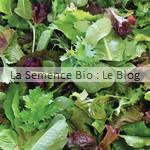 semence de jeune pousse mesclun bio - potager
