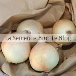 oignon - La Semence Bio - potager