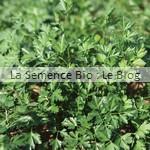semence persil bio - herbe aromatique - potager