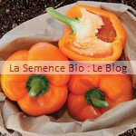 poivron semence bio - potager