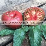 semence de tomate bio - jardin potager