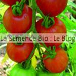 semences de tomates bio - La semence Bio - potager