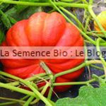 semence de courge - potager bio