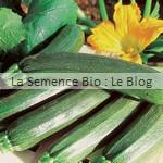 semence de courgette - potage bio