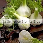 semences de fenouil - potager bio