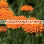 Souci des jardins fleurs bio - semence jardin