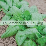 semence epinard bio - La Semence Bio - potager