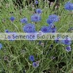 semences bio bleuet