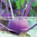 semence de chou-rave bio - potager