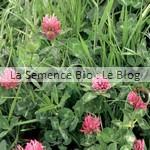 semis de trèfle - engrais verts bio La Semence Bio