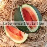 semence de pastèque bio - potager