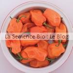 semence de piment -potager bio
