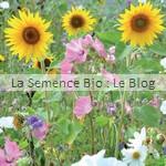 Fleurs en mélange semence bio - engrais vert - fleur