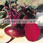 betterave semences bio - graines pour potager