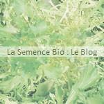 Chicorée bio - semences potageres