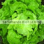 laitue semences bio - graines pour potager