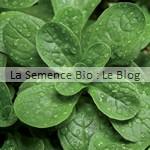 semences bio mache