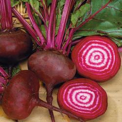 betterave Chioggia - semences bio - légumes d'autrefois