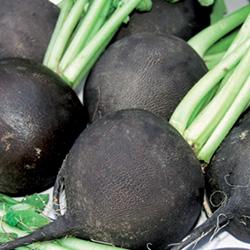 Radis Noir Gros Rond d'Hiver - semences bio - légumes d'autrefois