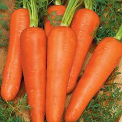 Carotte de Colmar à Cœur Rouge - semences bio - légumes autrefois