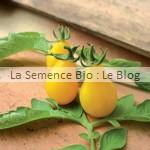 semences bio de tomate - jardin potager en couleur