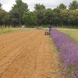 ferme semenciere -semences bio