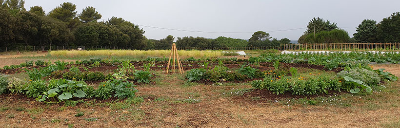 cultures sur mandala, ferme semencière bio