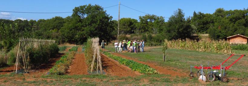 ferme semencière 100% Bio - AGROSEMENS