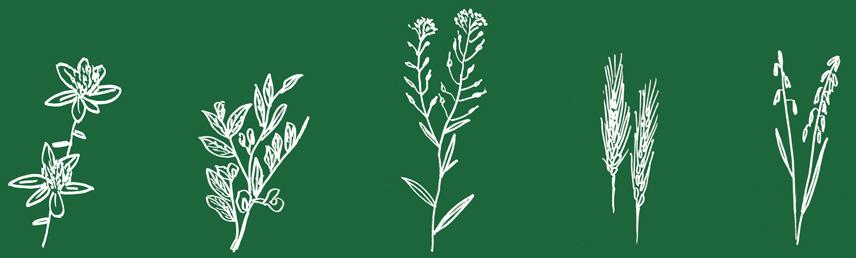 engrais verts bio