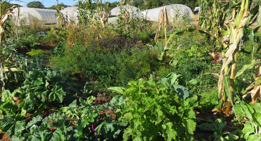 mandala -ferme semenciere - permaculture bio