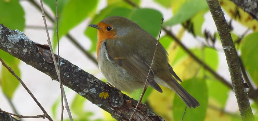 oiseau automne bio