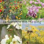 Mélange de fleurs abeilles