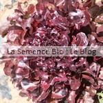 Salad Bowl rouge semences bio