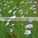 semences bio lin bleu