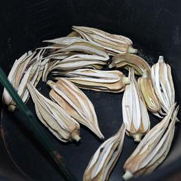 Okra- semences bio - Gombo